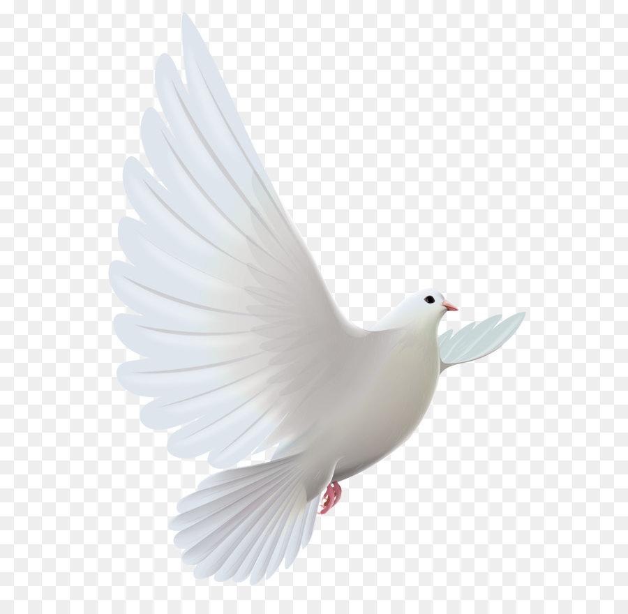 Columbiformes, Burung, Doa gambar png
