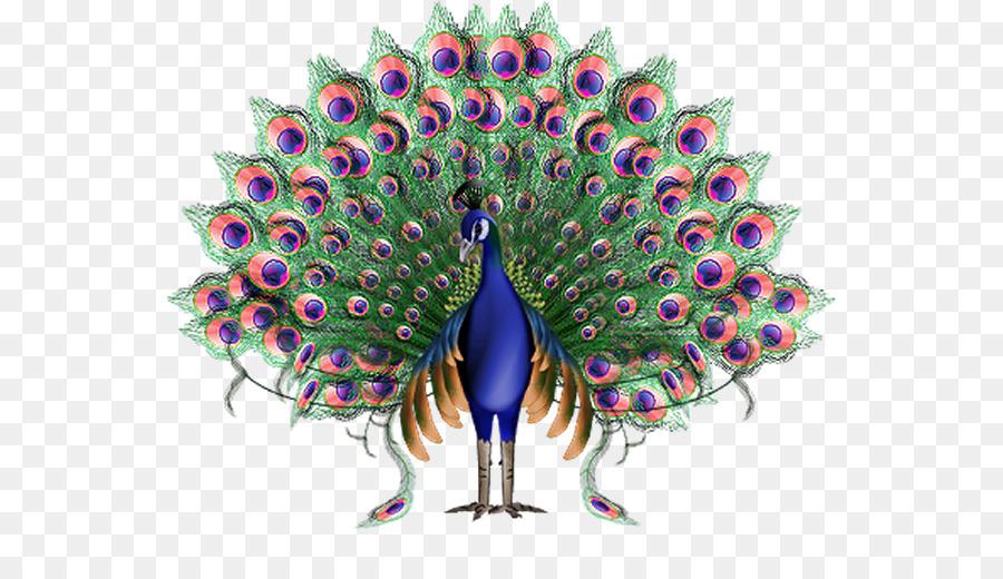 1060+ Gambar Burung Merak Animasi Gratis