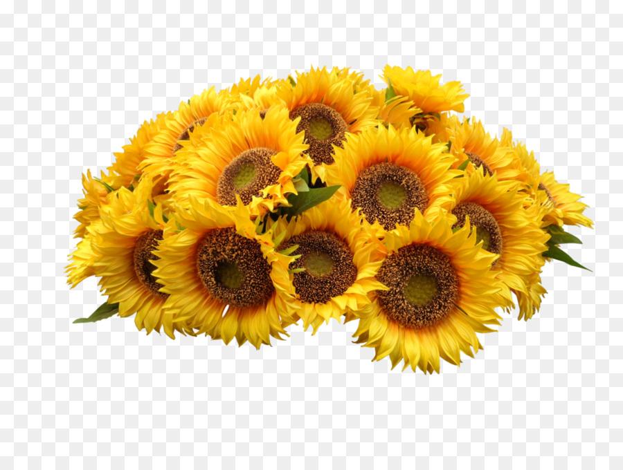 Umum Bunga Matahari Bunga Karangan Bunga Gambar Png