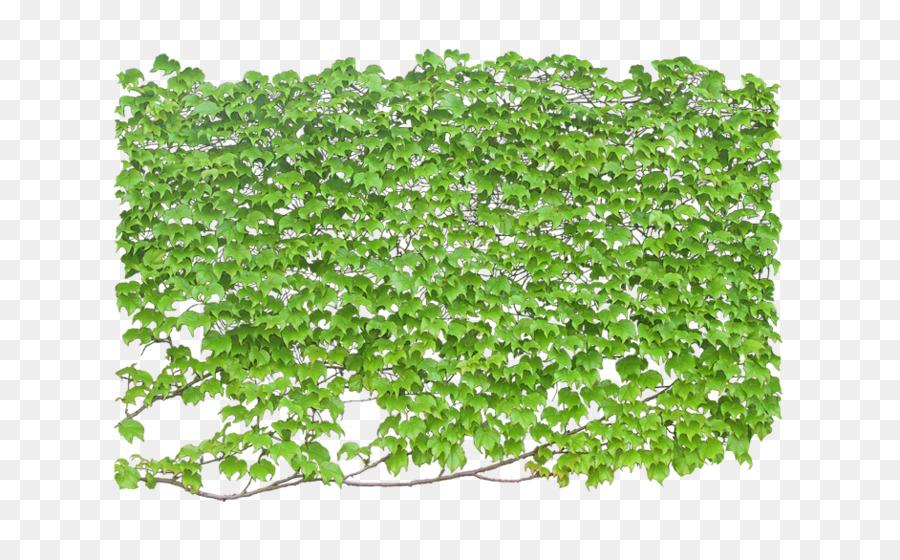 Pohon Anggur Pabrik Gambar Png