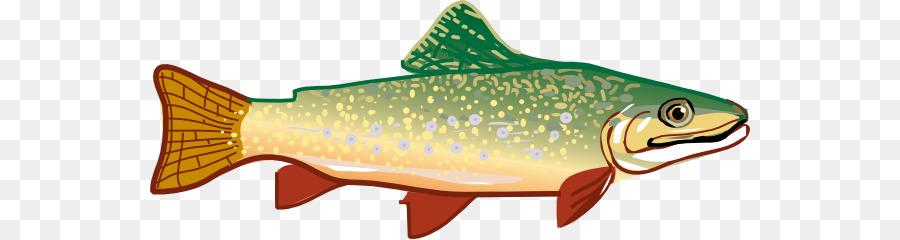 Unduh 830 Gambar Ikan Forel HD Terpopuler