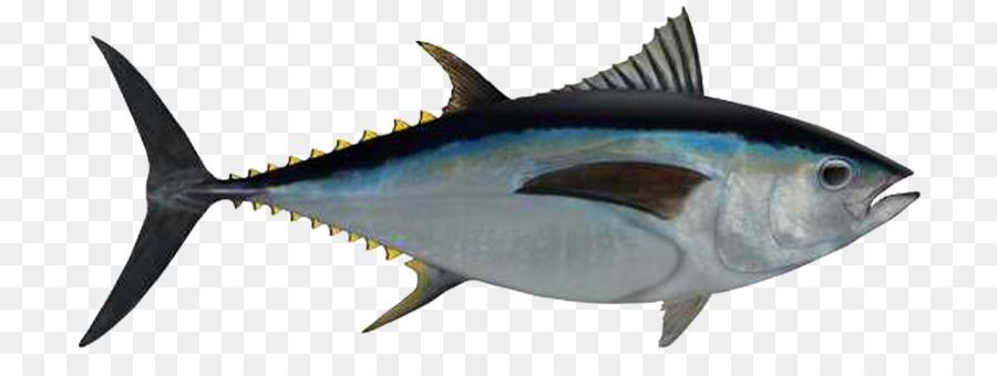 bigeye tuna albacore makanan laut gambar png bigeye tuna albacore makanan laut