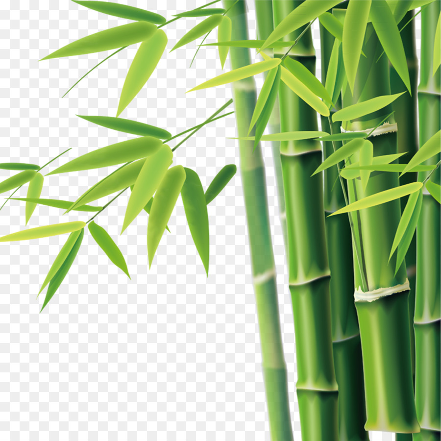 bambu bamboe euclidean vektor gambar png bambu bamboe euclidean vektor gambar png