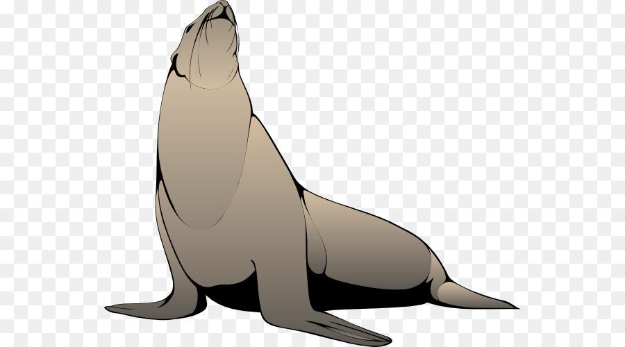 Anjing Laut Gratis Harpa Segel Gambar Png