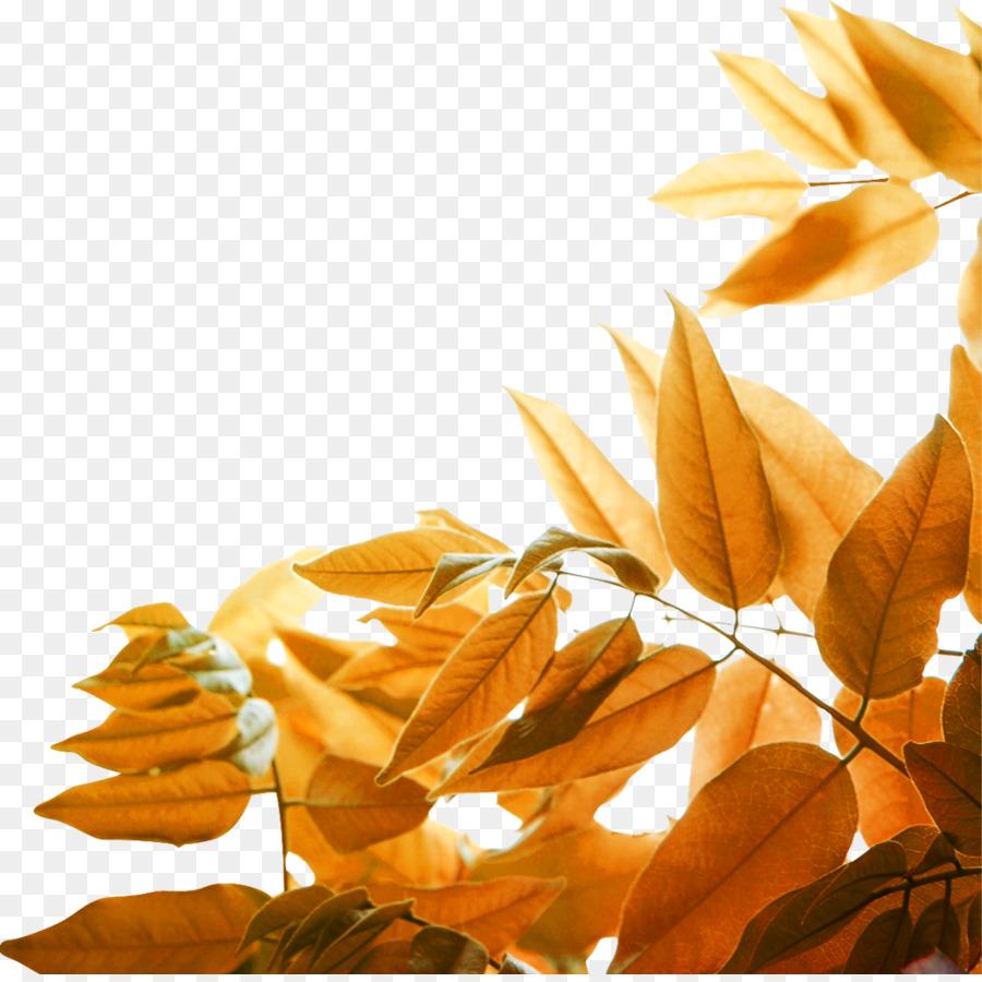 Download 82 Background Kuning Daun Gratis