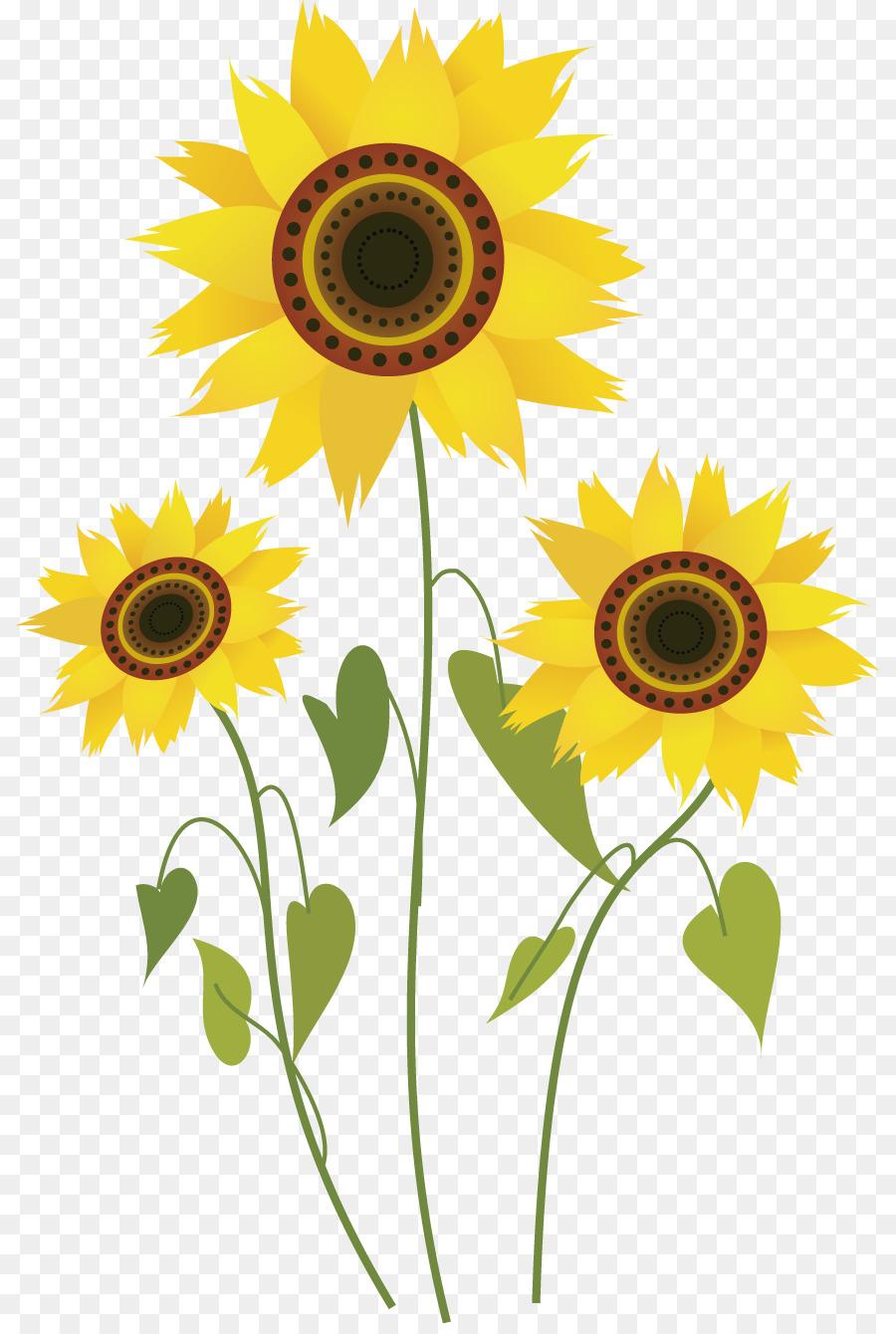 Umum Bunga Matahari Bunga Gambar Gambar Png