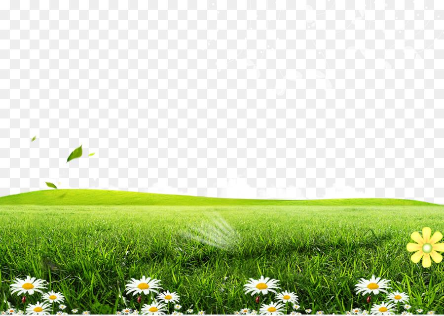 Download 66 Background Putih Rumput Gratis