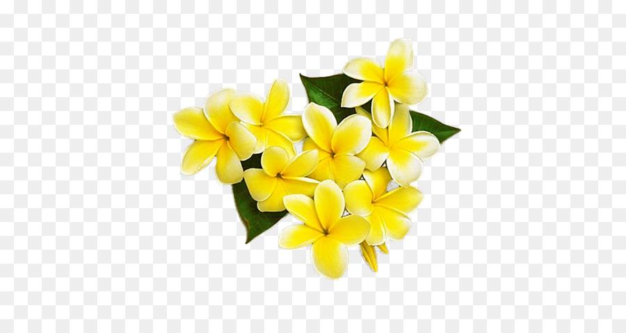 Kuning Bunga Frangipani Gambar Png