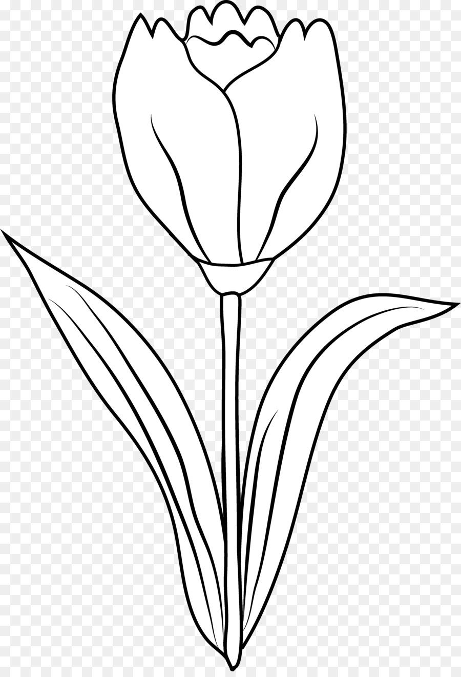 Tulip Hitam Dan Putih Gambar Gambar Png