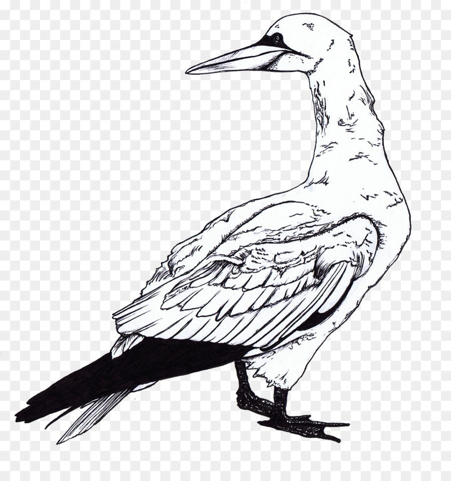 Camar Burung Buku Mewarnai Gambar Png