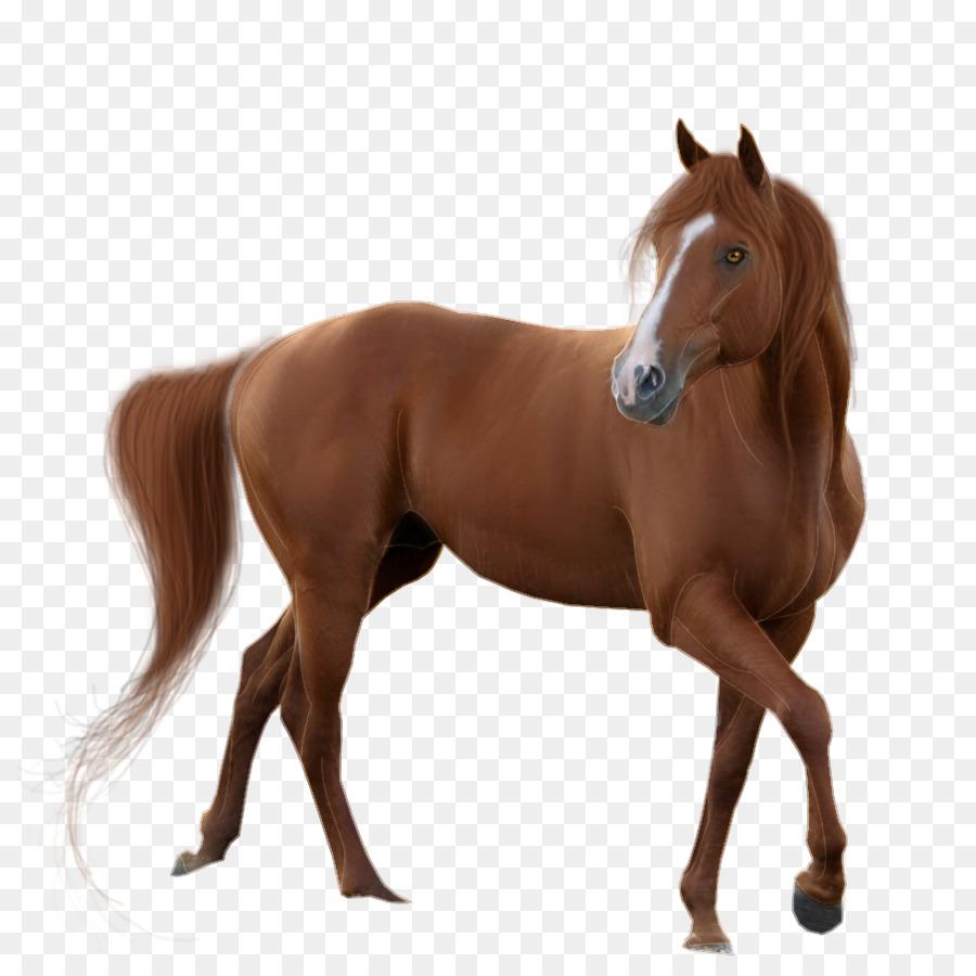 American Quarter Horse Mustang Desktop Wallpaper Gambar Png