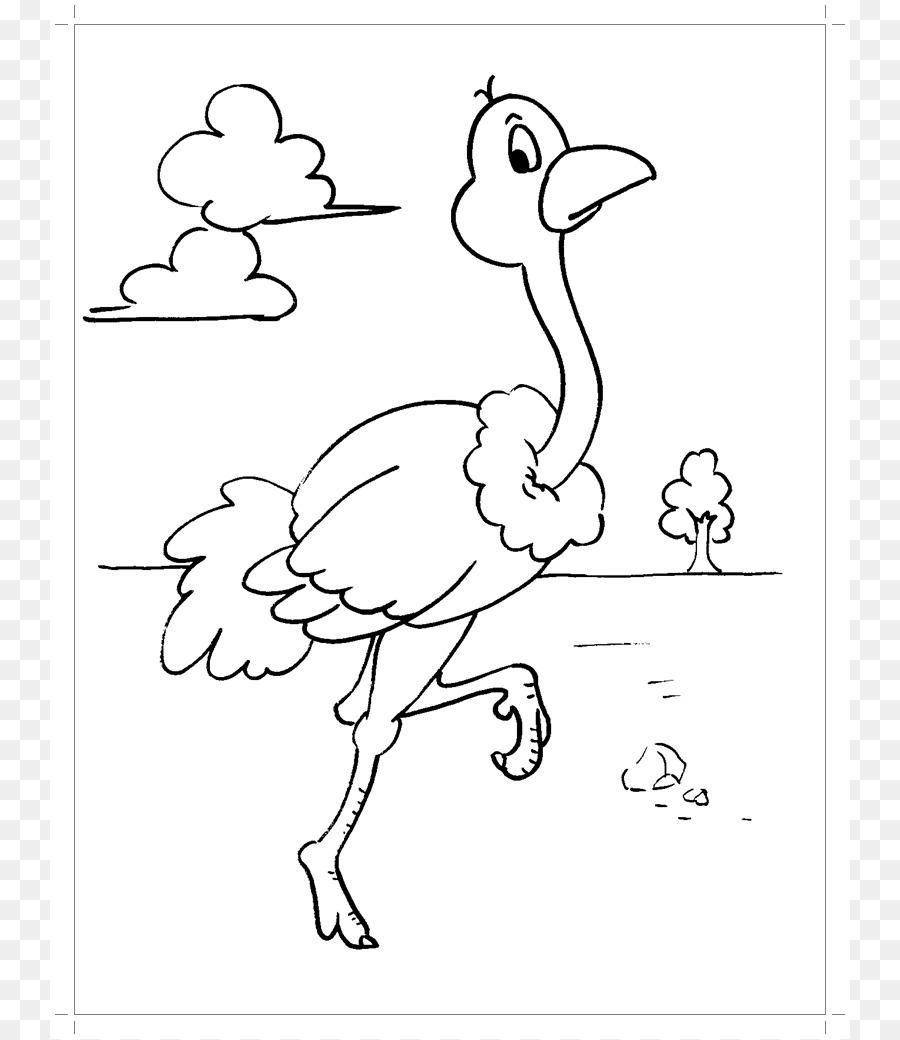 Burung Umum Burung Unta Buku Mewarnai Gambar Png