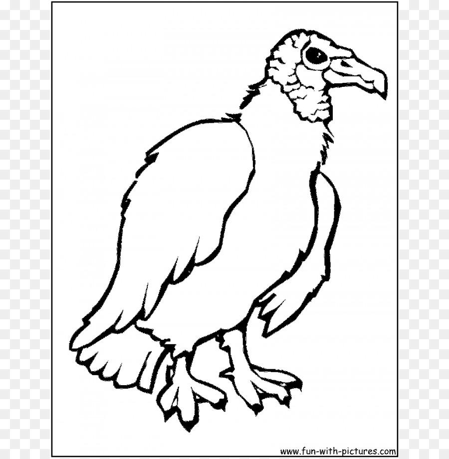 Turki Vulture Burung Buku Mewarnai Gambar Png