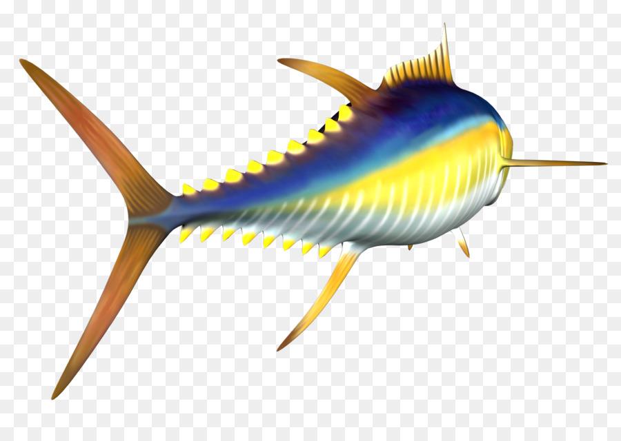 Unduh 830 Koleksi Gambar Ikan Tuna Madidihang HD Terbaru