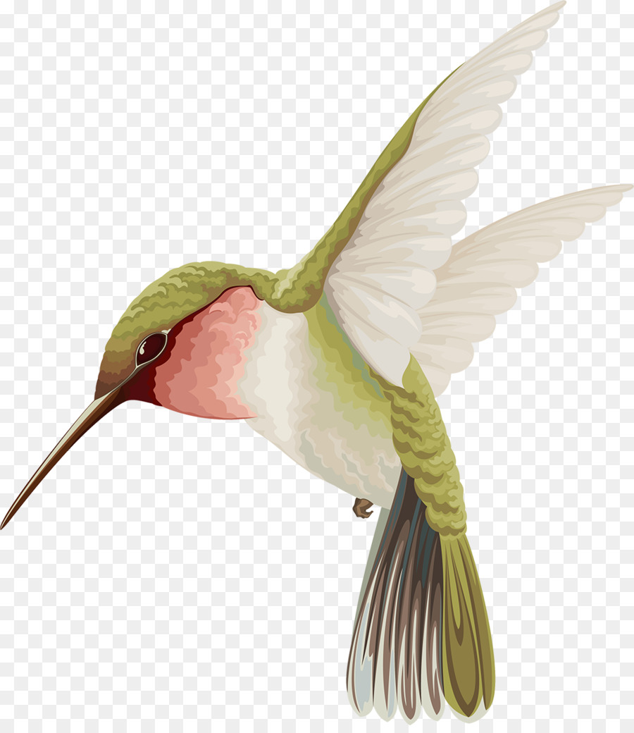 Unduh 67 Gambar Burung Terbang Lukisan Terbaik Gambar Burung