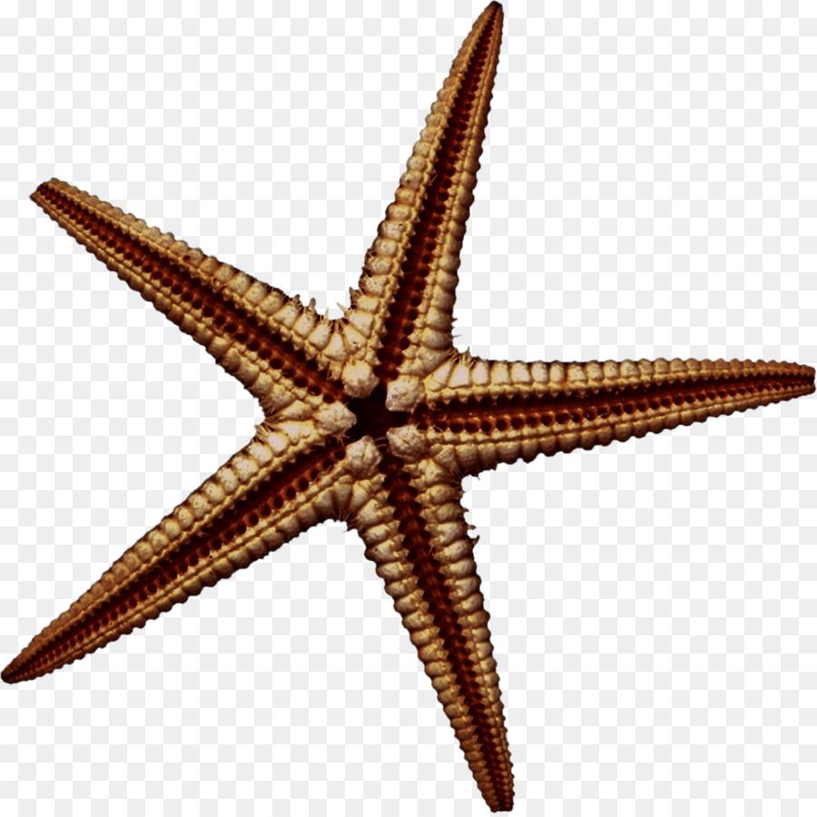 44 Gambar Kolase Binatang Laut Terbaru Kumpulan Gambar Kolase