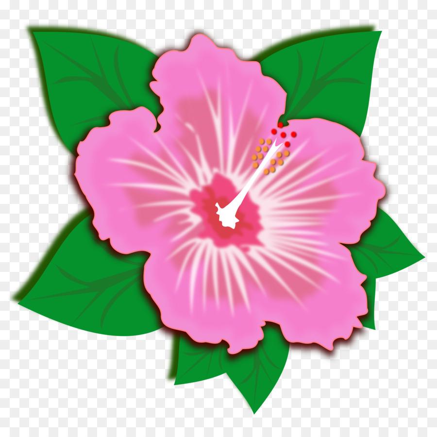 Kembang Sepatu Bunga Merah Muda Desktop Wallpaper Gambar Png
