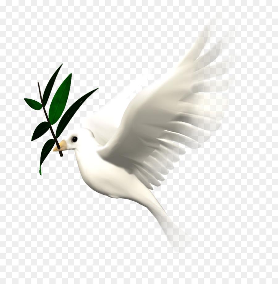 35 Terbaik Untuk Animasi Burung Merpati Amanda T Ayala