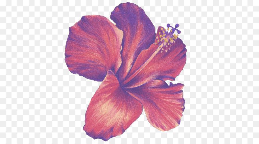 Bunga Gambar Gambar Berwarna Pensil Gambar Png