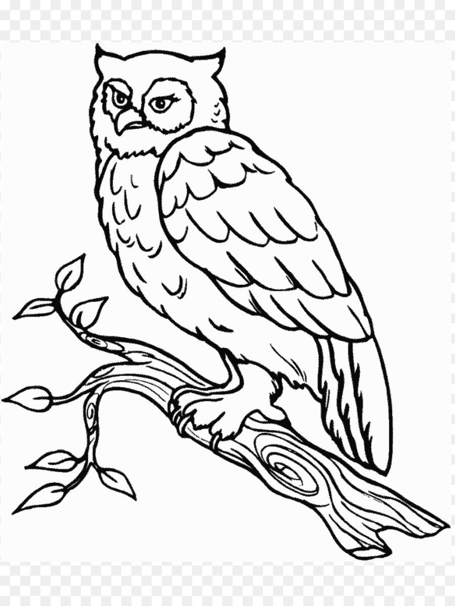 Burung Hantu Snowy Owl Buku Mewarnai Gambar Png
