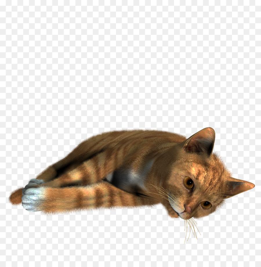 Kucing Siam Kucing Populer Nama Kucing Gambar Png