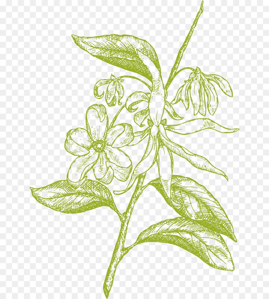 31 Lukisan Bunga Kenanga Koleksi Bunga Hd