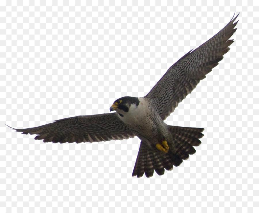 Falcon Alapalap Kawah Tiket Pesawat Gambar Png