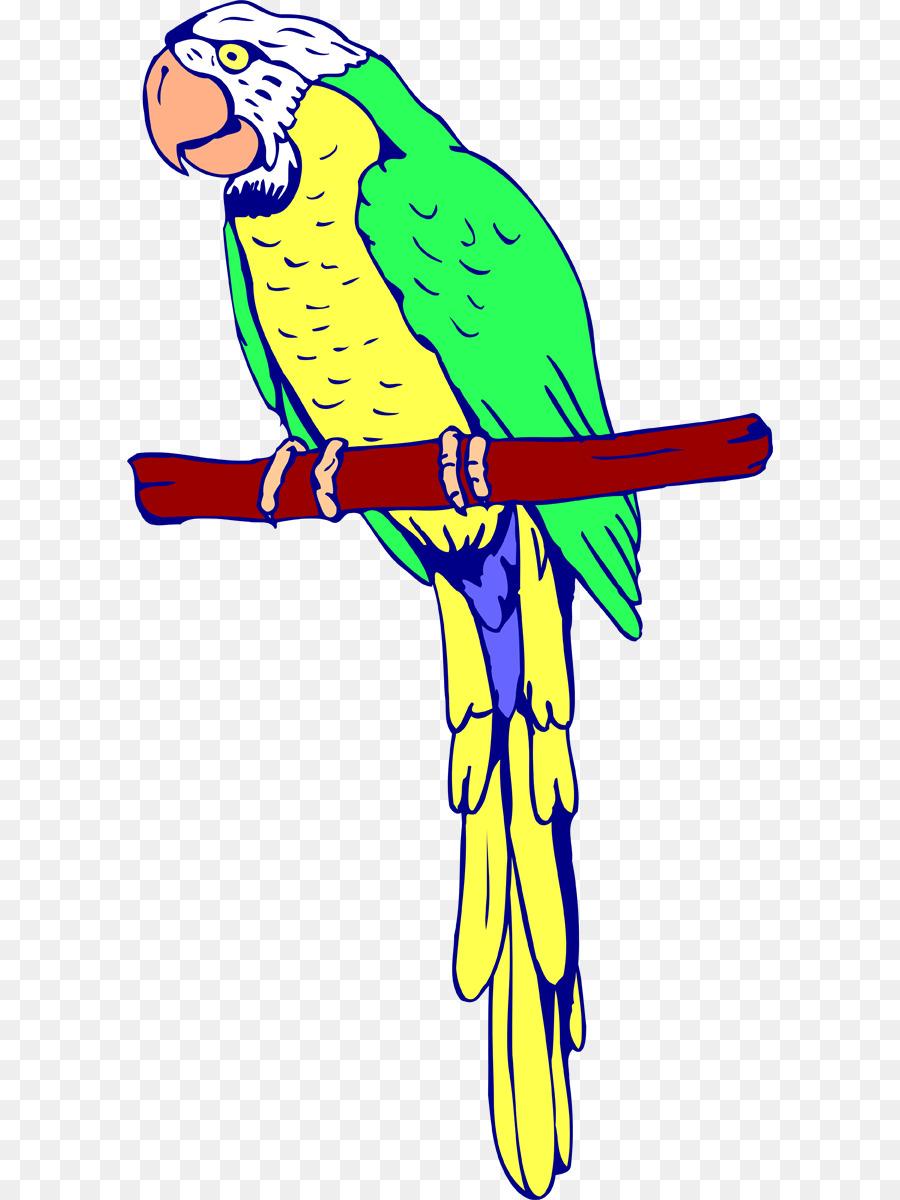 Burung Beo Burung Buku Mewarnai Gambar Png