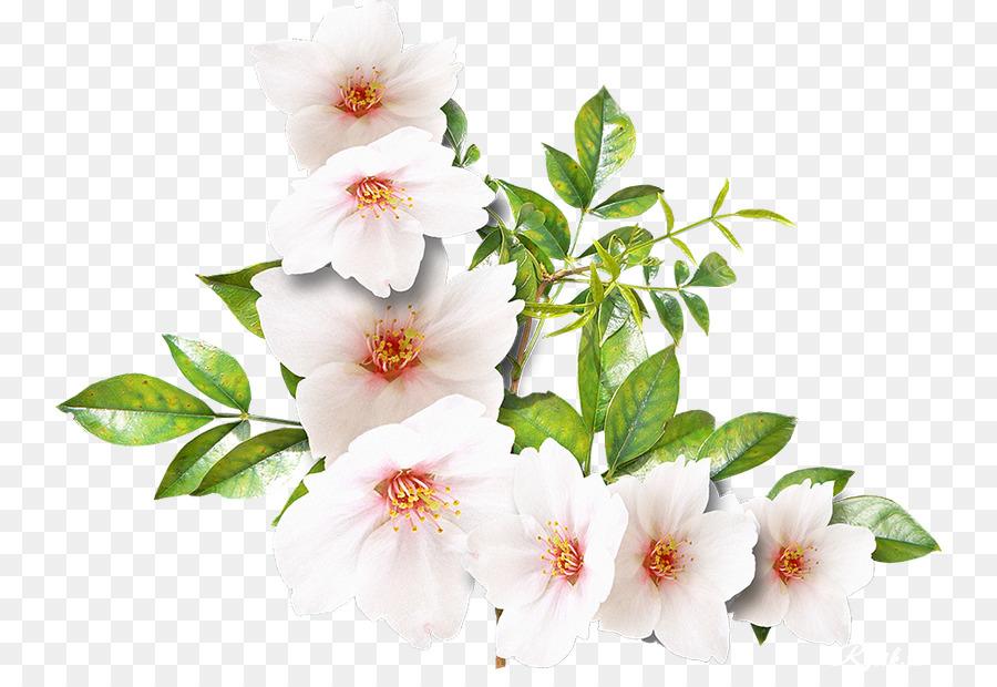 Bunga Putih Fotografi Gambar Png