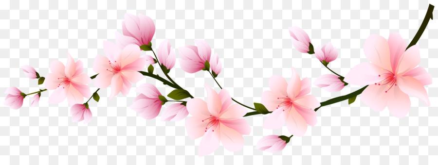 Blossom Bunga Sakura Gambar Png