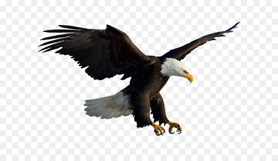 61 Foto Gambar Burung Elang Png HD Terbaru