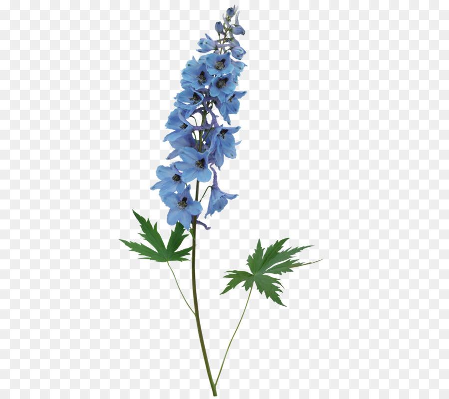 Download 45 Background Bunga Lonceng Biru Gratis