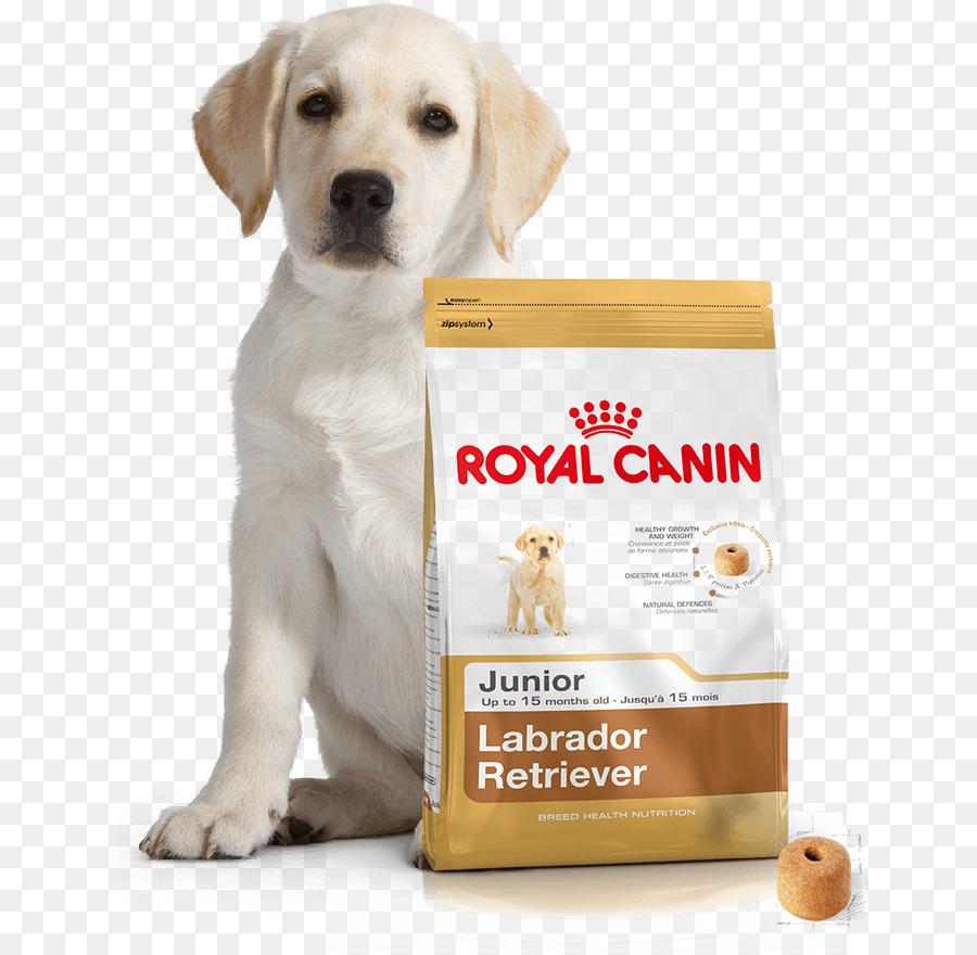Labrador Retriever Anjing Anjing Maltese Gambar Png