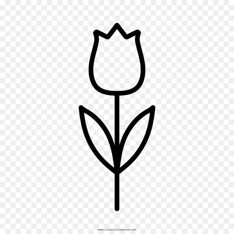 Bunga Tulip Buku Mewarnai Gambar Png