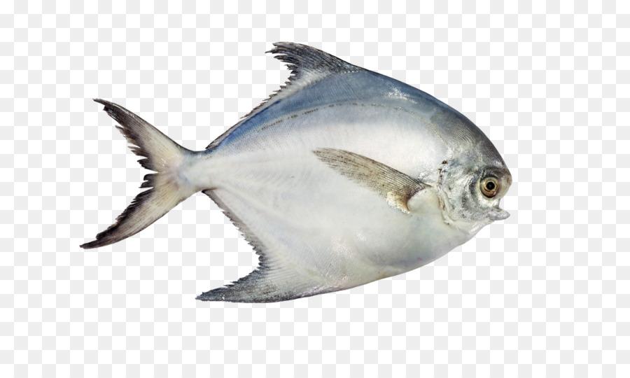 34 Gambar Kartun Ikan Bawal Kumpulan Gambar Kartun