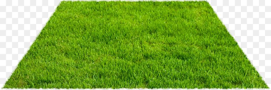 rumput sintetis rumput pakan ternak gambar png rumput sintetis rumput pakan ternak