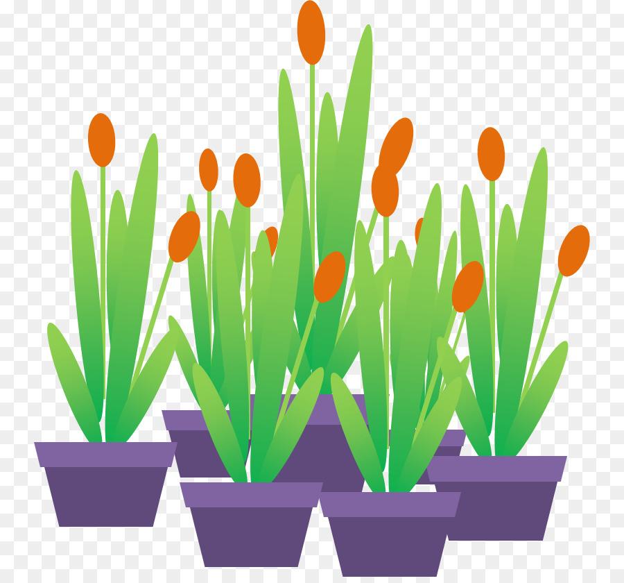 Film Animasi Microsoft Powerpoint Tulip Gambar Png