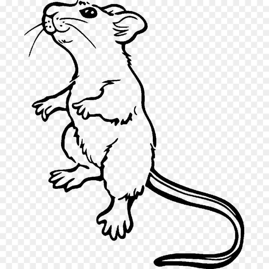 Tikus Got Mouse Buku Mewarnai Gambar Png
