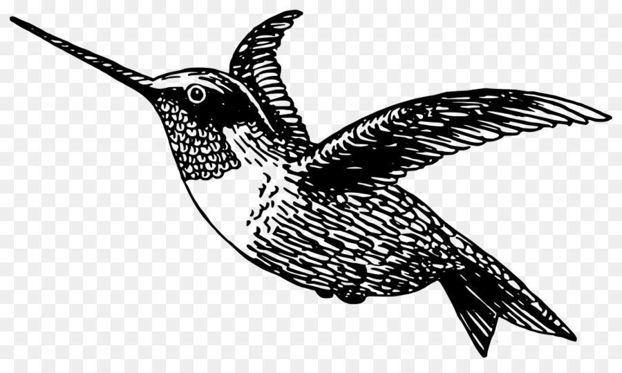Gambar Hummingbird Buku Mewarnai Gambar Png