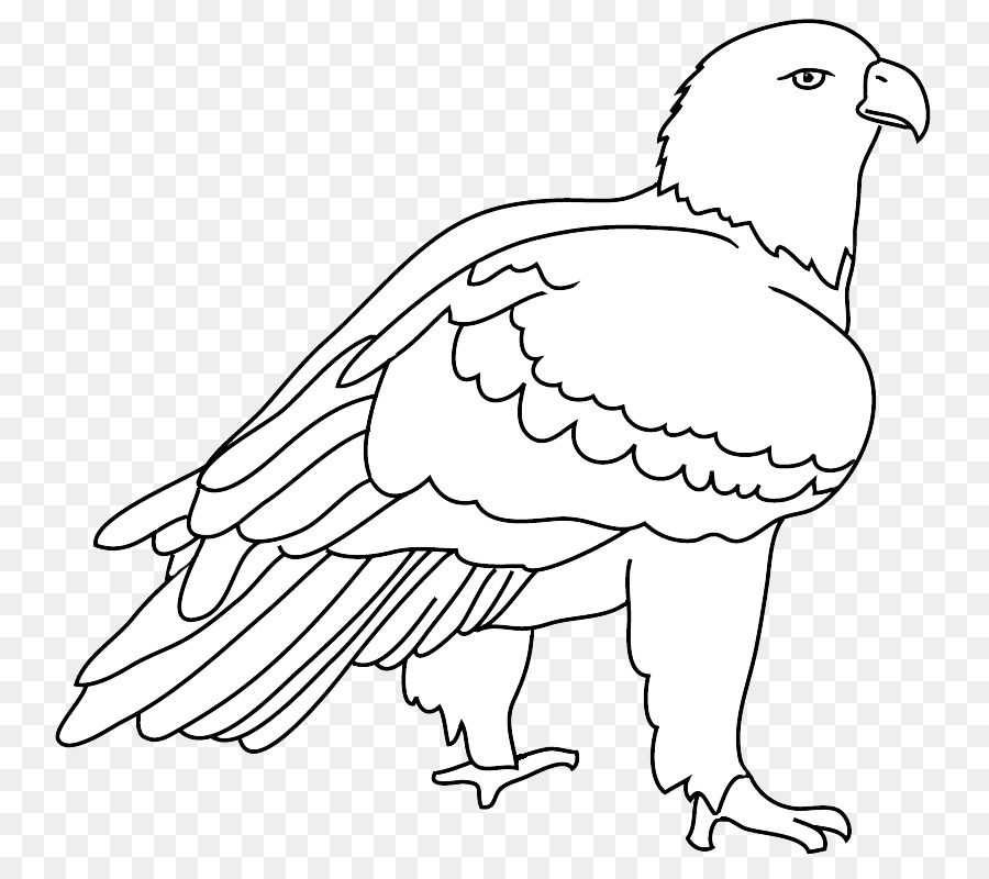 41 Foto Gambar Burung Elang Pakai Pensil   Gratis