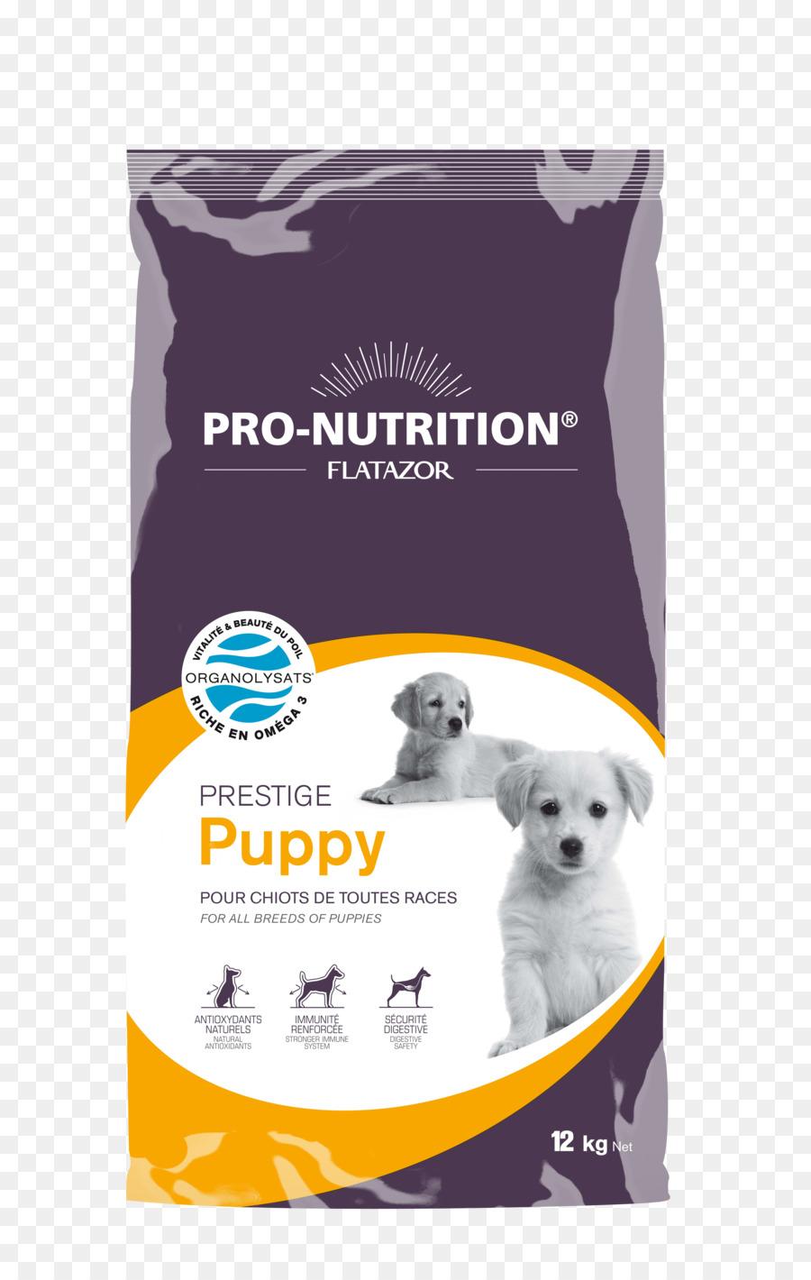 Anjing Pudel Makanan Anjing Gambar Png