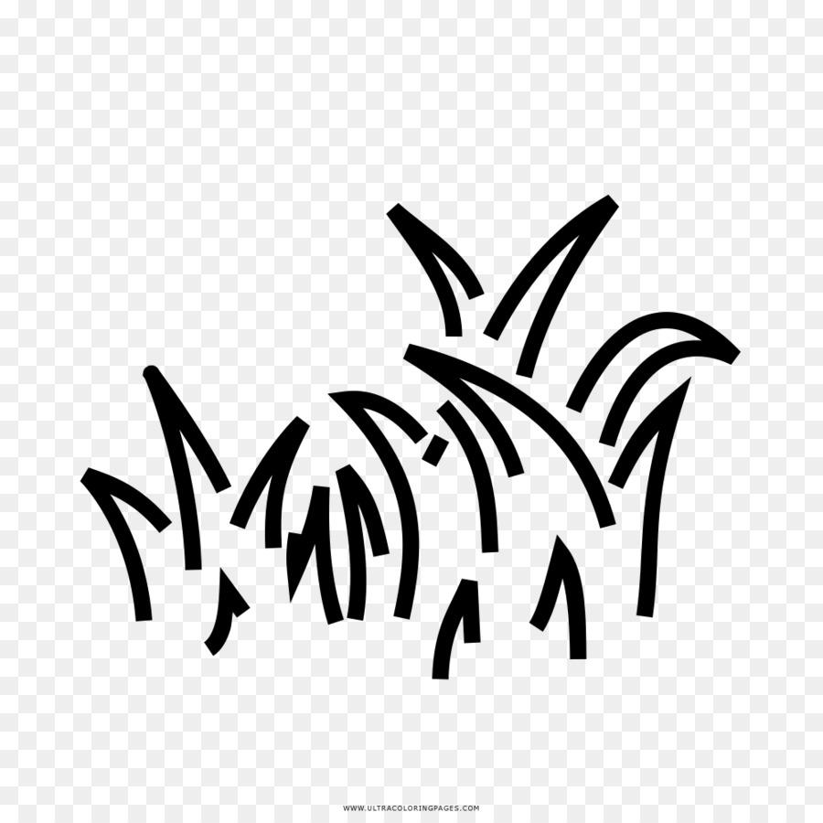 Gambar Rumput Buku Mewarnai Gambar Png