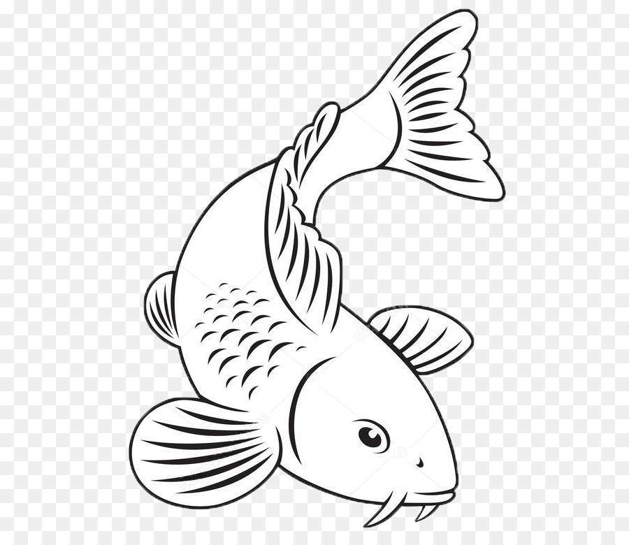 Gambar Ikan Koi Kartun Hitam Putih Gambar Ikan Hd