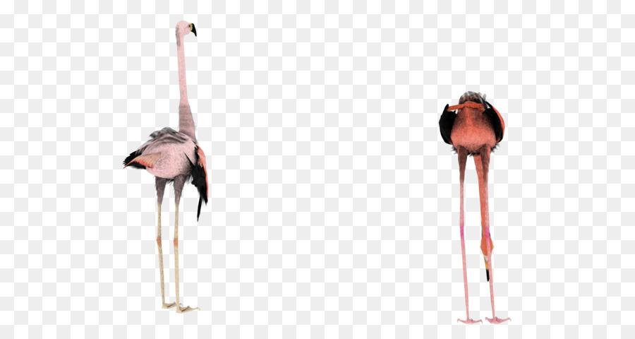 Burung Flamingo Desktop Wallpaper Gambar Png