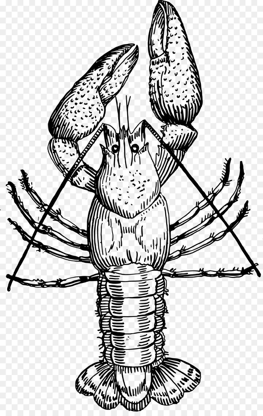 Lobster Air Tawar Gambar Louisiana Udang Gambar Png