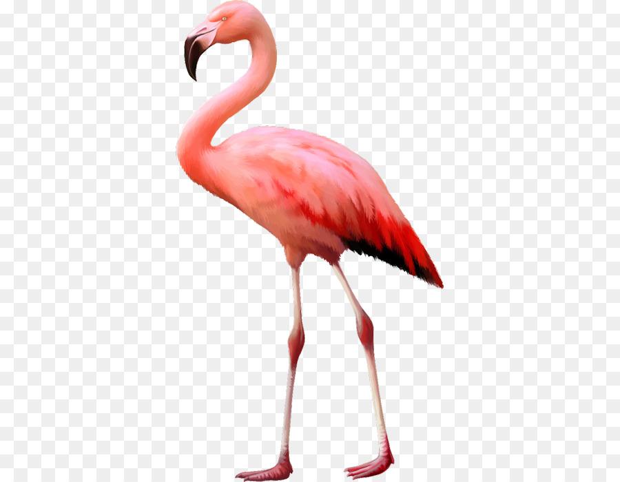 Burung Flamingo Fotografi Saham Gambar Png
