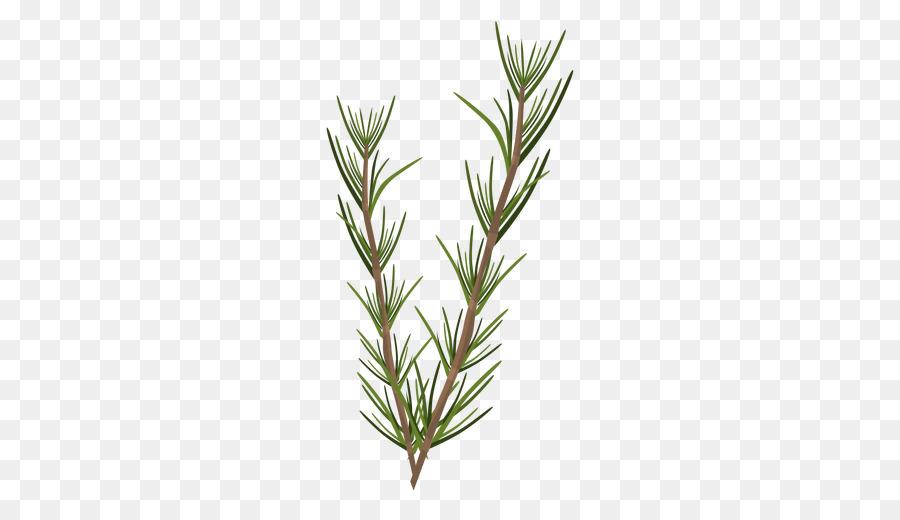 Rosemary Daun Tanaman Herba Gambar Png