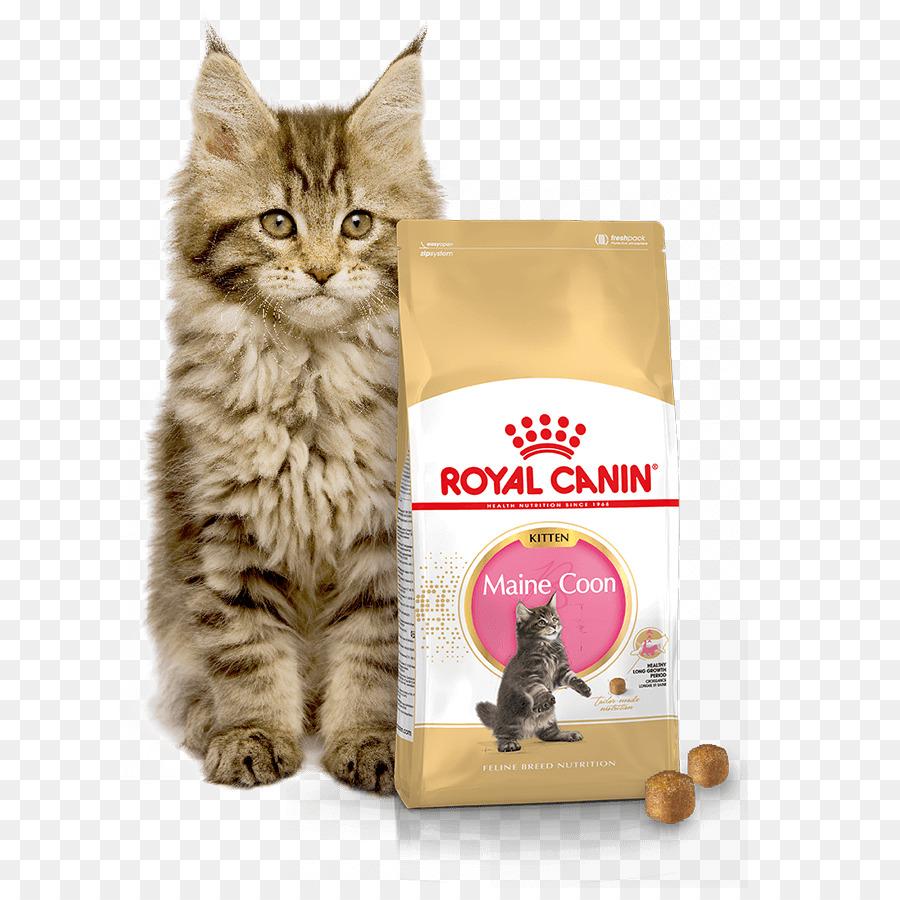 Makanan Kucing Maine Coon Kucing Gambar Png