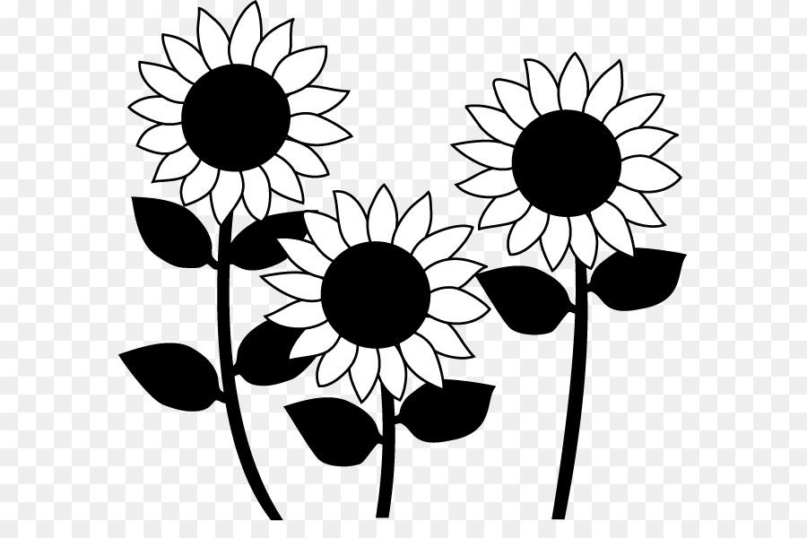 55+ Gambar Bunga Matahari Hitam Putih Paling Cantik