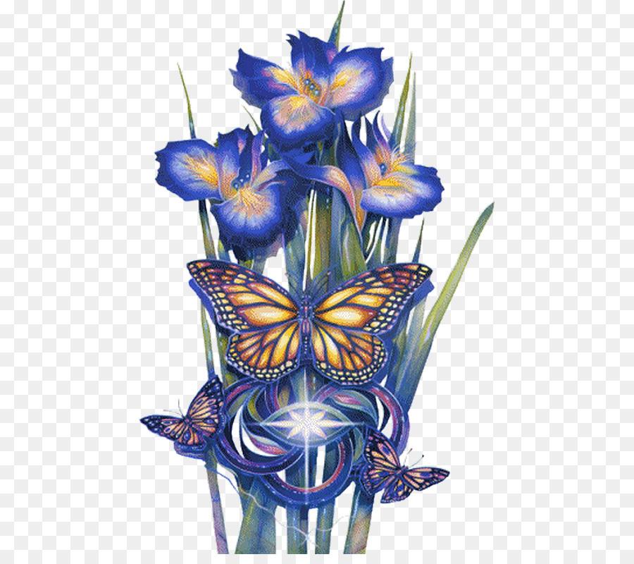 Anggrek Biru godean.web.id